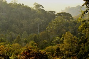 Mondulkiri - Jungle au couché du soleil