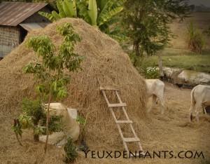 Chez l'habitant - Fesses de vaches
