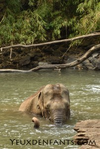 Mondulkiri - Princesse attend son bain