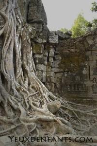 Angkor - Nature chef