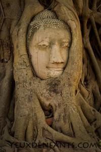 Ayutthaya - Tête de Bouddha