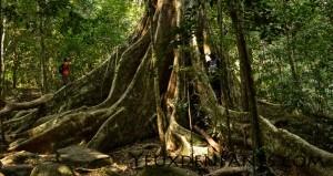 Khao Yai National Park - In the jungle