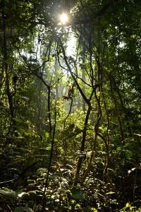 Khao Yai National Park - Lumière transperçante