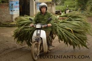 Région de Cam Thuy - Bambous