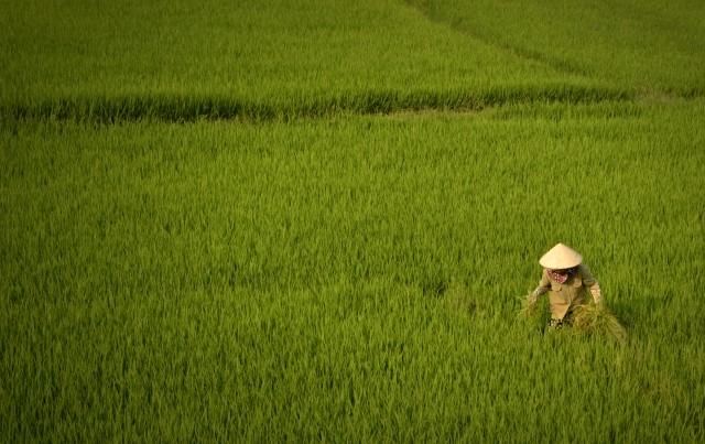 Images du Viêtnam