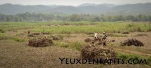 Région de Cam Thuy - Rencontre furtive