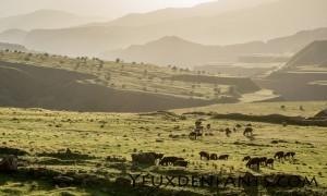 Dushambé et Qalai Khum - Pâturage au soleil couchant