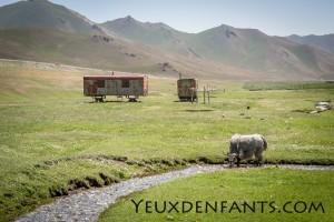 Yak et pâturage - Région de Sary Tash